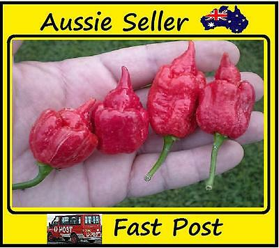 Chilli Seeds World Record Hottest Chilli Peppers Trinidad Scorpion 100 Seed Lots