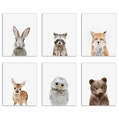 Baby Woodland Animals Poster Prints - Set of Six Adorable Furry Portraits Wall -