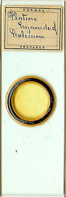 Platinocyanide of Calcium Microscope Slide by J. T. Norman for Polariscope