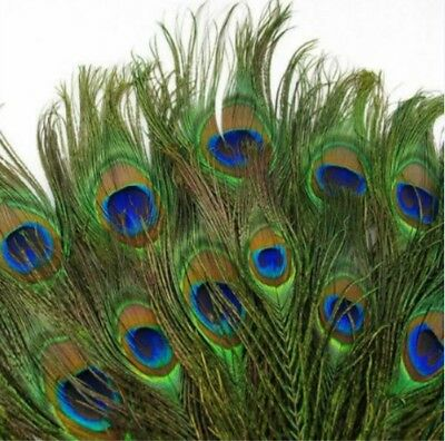 """100 X 10-12"""" Natural Real Peacock Tail Feathers for Decorative Arts & Crafts UK"""