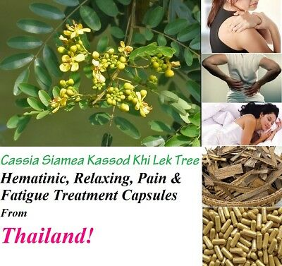 Cassia Siamea Kassod Khi Lek Tree Hematinic, Relaxing, Pain & fatigue Treatment