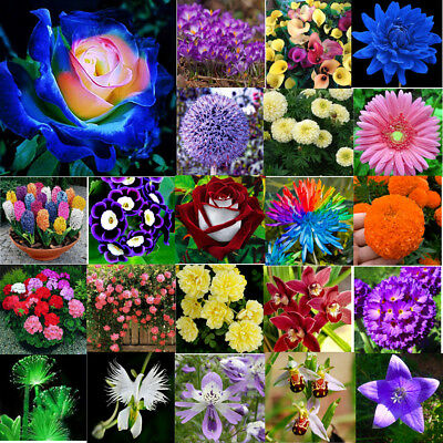 Mixed Plant Flower Seeds Daffodil Rose Oxalis Giant Allium Giganteum Garden Lot