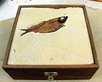 Fossil Fish Box Full of Rocks, Minerals and Fossils • 11 Samples • Great Prices