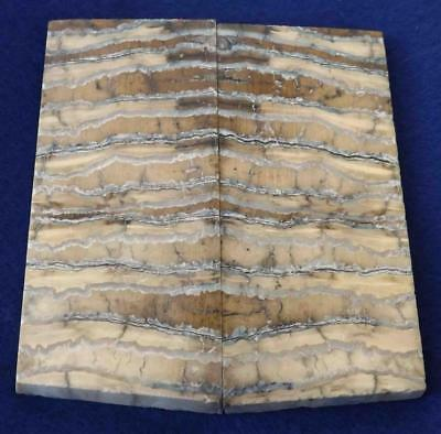 SIBERIAN MAMMOTH TOOTH Scales Stabilized 4 09