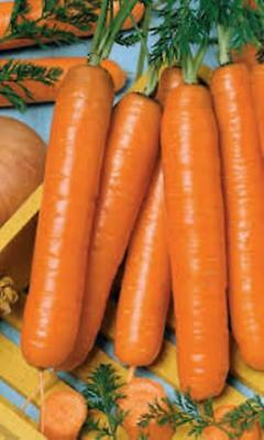 Seeds Carrot Vitamin Red-Orange Giant Vegetable Organic Heirloom Russian Ukraine