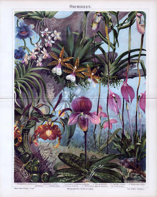 Philipp Orchideen Orchidee 10 Typen Chromolithographie 1888 C