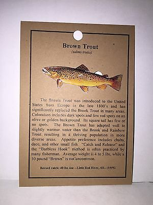 New Brown Trout Fish Hat Pin Lapel Pins   Free Shipping To U.s.