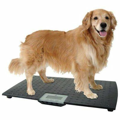 Animal Weighing..X LARGE Dog Cat Pig Etc Veterinary Black  Scales Up -100kg NEW