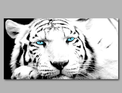 Black White Tiger Blue Teal Eyes Canvas Wall Art Framed