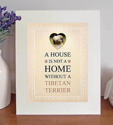 Tibetan Terrier 8 x 10 A HOUSE IS NOT A HOME Picture 10x8 Dog Print Fun Gift