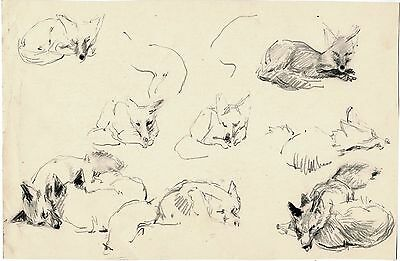 Drawings of FOX IN DIFFERENT POSITIONS by U/K Russian artist