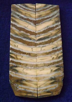 """Siberian Mammoth Tooth Scales Stabilized 3.8"""" x 1.2"""" x .18"""" #MT20"""