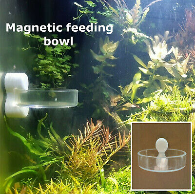 Magnetic cherry shrimp aquarium feeding bowl pellet food feeder clear acrylic