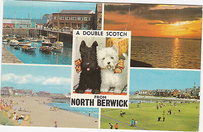 Postcard North Berwick Harbour Firth Of Forth East Beach Putting Greens 1976