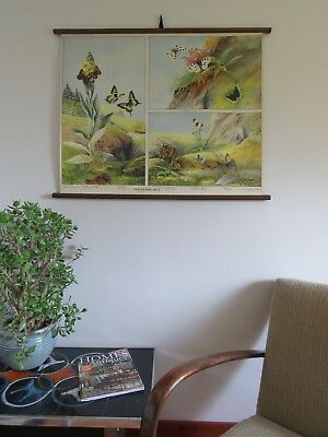 Rare vintage roll down school chart of BUTTERFLY Swedish educational wall chart