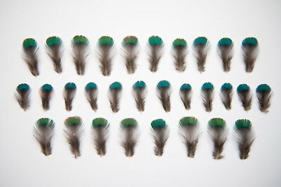 Very Small Natural Pheasant Neck Feathers 1-2cm Blue/ Green Iridescent - Ethical