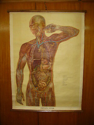 Antique Uk Human Body Lymphatic System Canvas School Map Mappa Carte Karte 1957