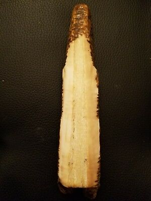 Eskimo artifact, pre-1900 St Lawrence Island, polished, scrimshaw