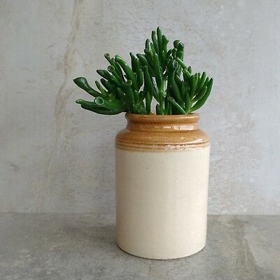 Vintage Stoneware Jar Crock Two Toned Pottery Canister Old Storage Holds 800mls