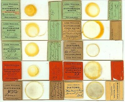 Various spp. Diatoms from Various Locations Microscope Slides by Lewis Woolman