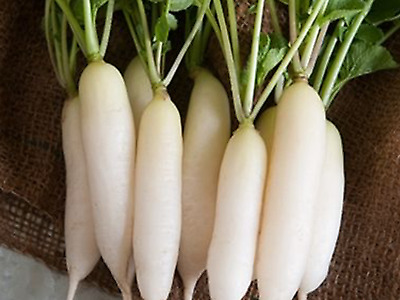 """Radish Seeds """"WHITE ICICLE"""" (Approx 100 Seeds) Excellent Garden Vegetable"""