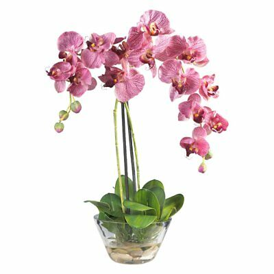 Nearly natural phalaenopsis silk flower with glass vase 5341 nearly natural phalaenopsis silk flower with glass vase mightylinksfo