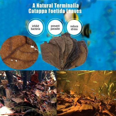 50/100/200g Leaf Almond Tree Natural Catappa Leaves Aquarium Clean Tool