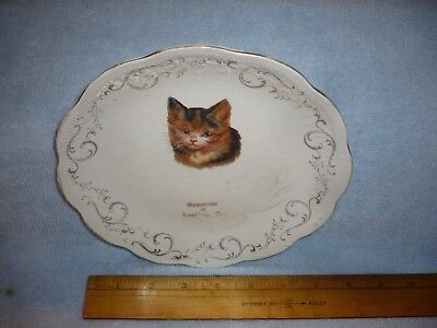 early souvenir of reading pa kitten kitty cat plate