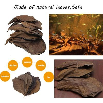 50/100/200g Clean Tool Natural Catappa Leaves Terminalia Leaf Almond Tree