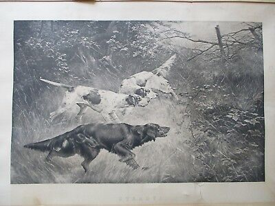 "Antique Photogravure By Thomas Blinks ""steady"""