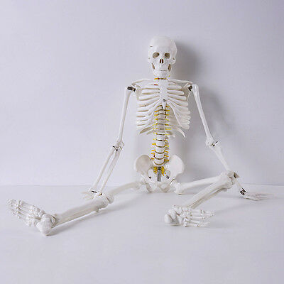Life Human Good-Quality Skeleton Model & Stand Medical Anatomical Aid Anatomy