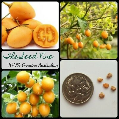 20+ YELLOW TAMARILLO SEEDS (Solanum betaceum 'Yellow') Tree Tomato Edible