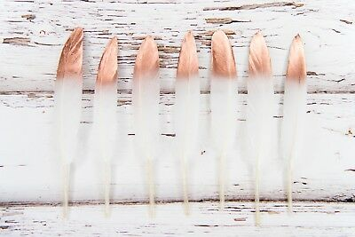 """Hand Painted Rose Gold Dipped Feathers 4-6"""" Great for weddings + dream catchers"""