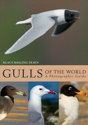 Gulls of the World : A Photographic Guide, Hardcover by Olsen, Klaus Malling