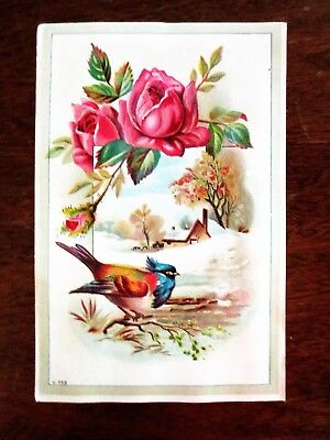 1800s Lion Coffee Woolson Spice Ohio Picture Trade Card Bird Roses Winter OH