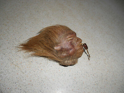 Mini Half Size mini Taxidermy art shrunken head  real animal skin hotrod hot rod
