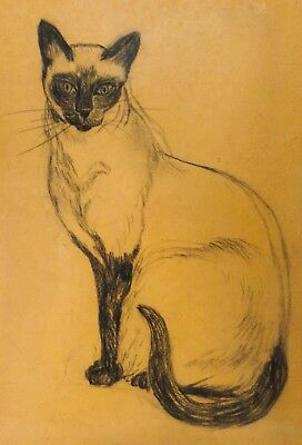Dexter Johnson /usa Early 20Th C Signed Charcoal Drawing Siamese Cat Orig Frame