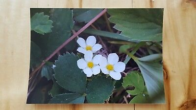 5x7 Floral spring wildflowers in bloom photograph in Colorado by Kristina Geroux