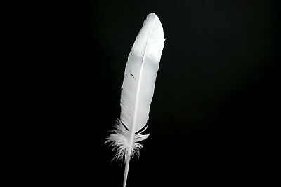 """Silver Dipped Large Turkey Feathers 10"""" - 12"""" - Hand painted -Great for weddings"""