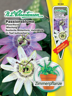 Passion Flower Mixture - Passiflora Special House Plant Ranker approx. ca.15