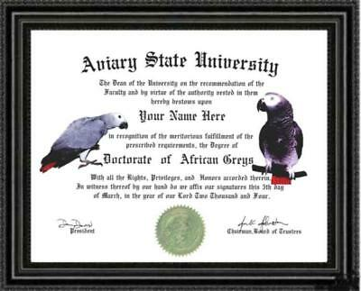 African Grey Lover's Doctorate Diploma / Degree Custom made & Designed for you