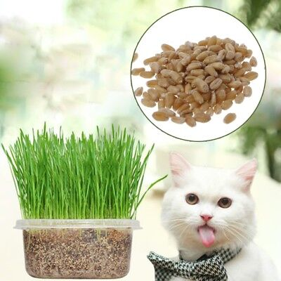 400PCS 100% Organic Cat Grass Seeds Wheat Catnip Healthy Treat Plant For Pets