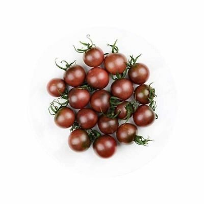200 Purple Tomato Seeds Delicious Vegetables and Fruit Organic Seeds S061