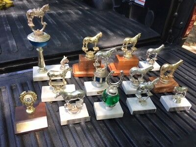 Horse Trophy Collection 13 trophies One Price only $3 ea.