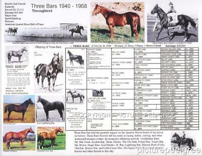 THREE BARS Thoroughbred race horse Quarter Horse foundation picture pedigree