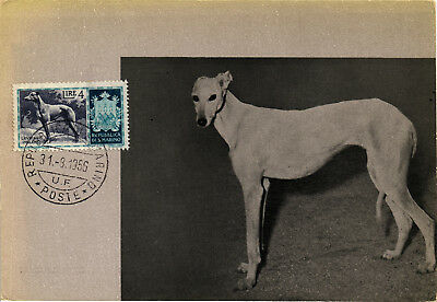 Cane Dog Chien Hund LEVRIERO GREYHOUND - MAXIMUM - San Marino - F002