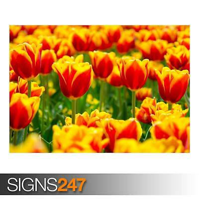 AD842 SPRING TULIP FIELDS NATURE POSTER Photo Poster Print Art * All Sizes