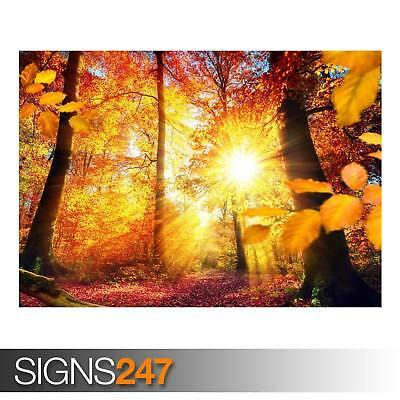 NATURE POSTER AD934 Photo Picture Poster Print Art A0 A1 A2 A3 A4 RED FOREST