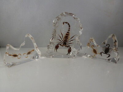 Set Of 3 Ed Speldy East Co. Realbugs Scorpions In Acrylic Desk Decorations