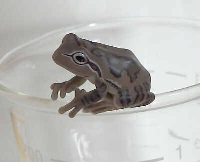 Capsule Toy Super Realistic Brown Tree Frog PUTITTO SERIES Gashapon Japan